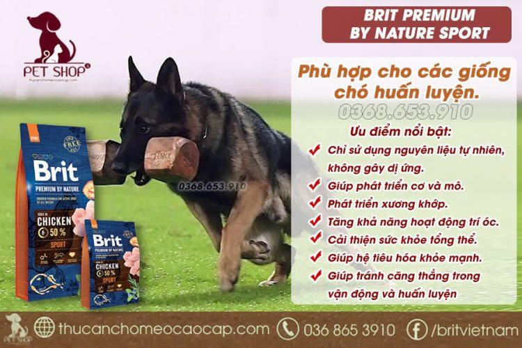 huấn luyện chó Becgie Bỉ nâng cao